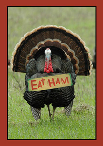 Happy Turkey Day 2012