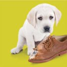 Lennox Rebates - Dog